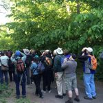 Announcing the Fall BBC Birdathon!
