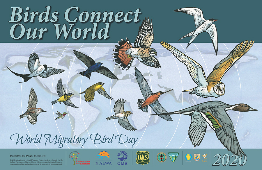 World Migratory Bird Day !!!WEEK!!! 2020