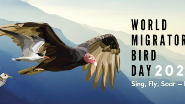 Announcing the Spring 2021 World Migratory Bird Day Birdathon!