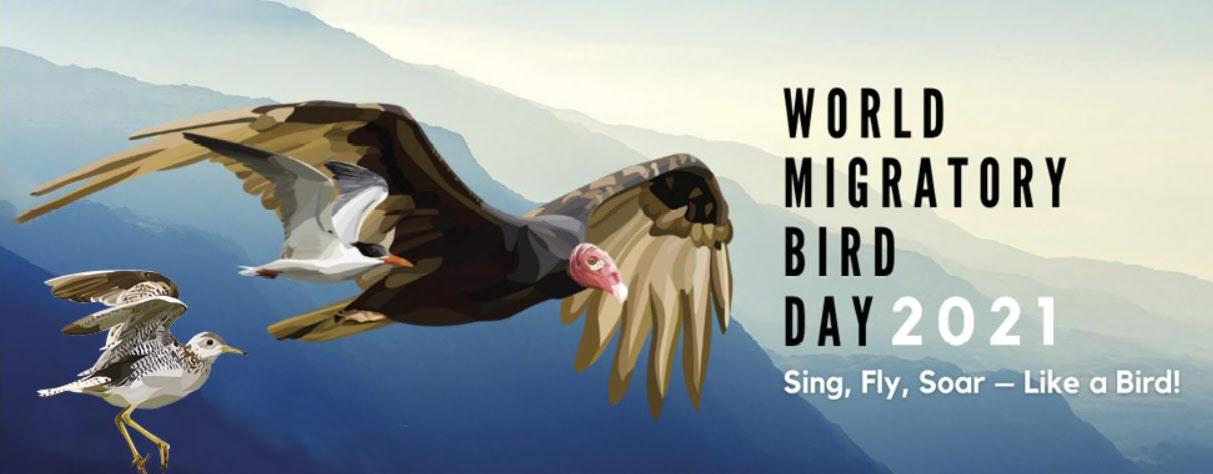 Announcing the Spring 2021 World Migratory Bird Day Birdathon!